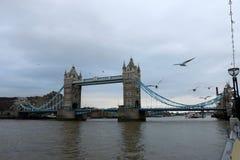 有鸥的塔桥梁 库存照片