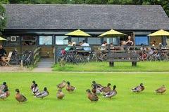 有鸭子的室外餐馆 库存图片