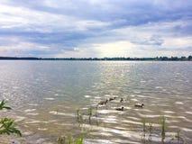 有鸭子的湖在波兰 图库摄影