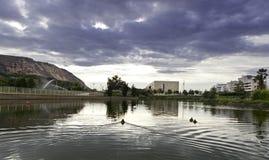 有鸭子的自然湖 库存照片
