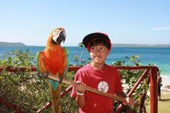 有鹦鹉的男孩 库存照片