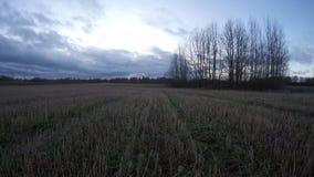 有麦子发茬的,时间间隔日出上面被收获的农田 影视素材