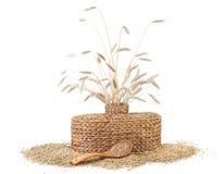 有麦子的耳朵的柳条花瓶 图库摄影