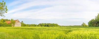有麦田和谷仓的农村风景全景 免版税库存照片