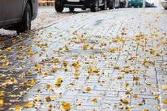 有黄色下落的叶子的湿边路在秋天 免版税库存照片