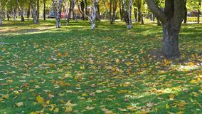 有黄色叶子、草和树的秋天公园 股票录像