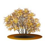 有黄色叶子和阴影的布什 免版税库存照片