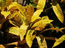 有黄色叶子的一棵植物 免版税库存图片