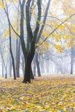 有黄色和桔子的秋季公园留给下落从树o 库存图片