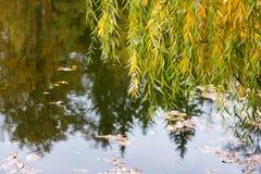 有黄色树的Autumn湖 免版税库存照片