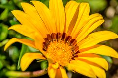 有黄色花的庭院 免版税库存照片