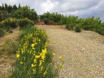 有黄色花的美丽的道路 免版税库存照片