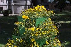 有黄色花的花盆在城市公园在晴天 库存图片