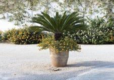 有黄色马樱丹属的泥罐和小棕榈树在Masseria Torre Coccaro 库存图片