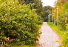 有黄色,红色和绿色叶子的美丽的胡同  在秋天公园 沿灯笼路 库存图片