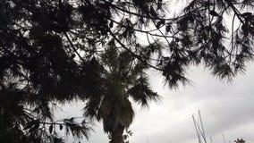 有黑暗的天空的棕榈在背景中 股票视频