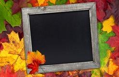 有黑板的秋天叶子 库存照片