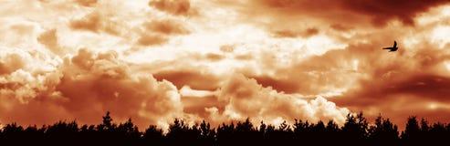 有黑紫色阴沉的天空的全景与一只孤独的鸟 免版税图库摄影