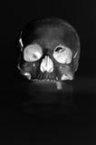 有仅一颗牙的人的头骨在黑白 免版税库存图片