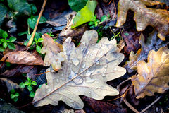 有水下落的抽象秋天叶子 免版税库存图片