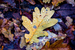 有水下落的秋天叶子 库存图片
