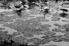 有水下落的莲花叶子在池塘 免版税库存图片