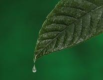 有水下落落的绿色新鲜的叶子 图库摄影