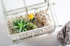 有活仙人掌和自已生态系的美妙的玻璃容器 免版税库存图片