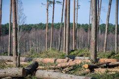 有击倒的树的森林 免版税库存图片