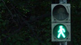 有移动的绿灯和保险柜的红绿灯 城市轻的业务量 红绿灯改变的颜色 股票录像