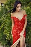 有黑发的肉欲的妇女在豪华鞋带红色礼服 库存照片