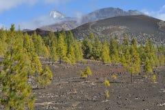 有绿叶和多云天空的,特内里费岛泰德峰 免版税库存图片