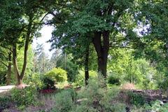 有绿叶的平安的公园 免版税库存照片