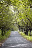 有绿叶的森林公路 库存照片