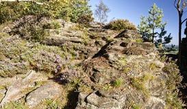 有绿叶稀稀落落的成长的一个岩石地形在它的 免版税库存照片