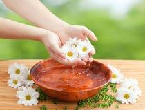 有水和春黄菊下落的女性手  库存图片