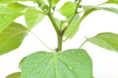有水和维生素的绿色植物在叶子 库存图片