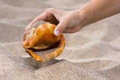 有贝壳的手在海滩 免版税库存照片