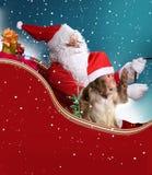 有猴子的圣诞老人 库存照片