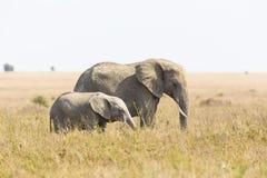 有婴孩大象的大象母亲在非洲 免版税库存图片