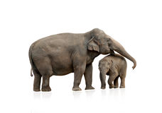 有婴孩的大象女性 库存图片
