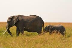 有婴孩的大象母亲 免版税库存照片