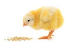 有婴孩的鸡膳食 免版税库存照片