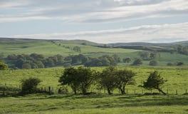 有绵延山的豪华的绿色英国乡下 免版税库存照片