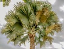 有黑暗的天空的五颜六色的棕榈 免版税库存图片