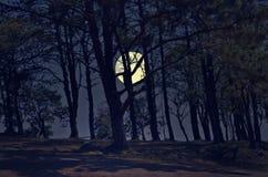 有满月的杉木森林在晚上 免版税库存图片