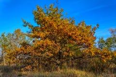 有晴朗的射线的庄严五颜六色的森林 自然公园 库存照片