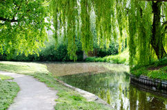 有结束增长的树的运河 免版税库存图片