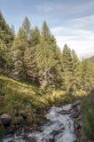 有结构树的河 免版税库存图片