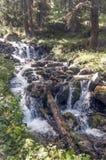 有结构树的河 免版税图库摄影